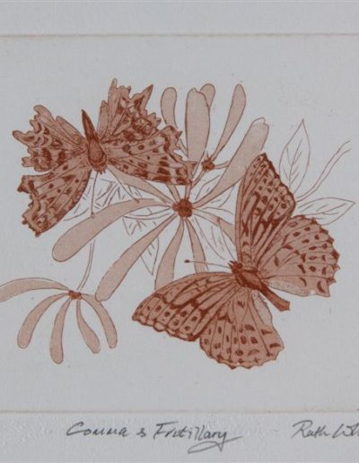 Butterfly-aquatint