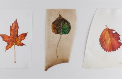 Autumn leaves on vellum